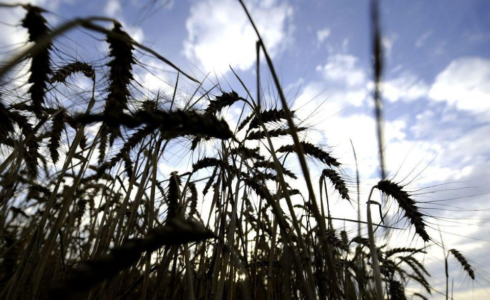 Saudi, US firms buy $201m stake in Canadian grain handler