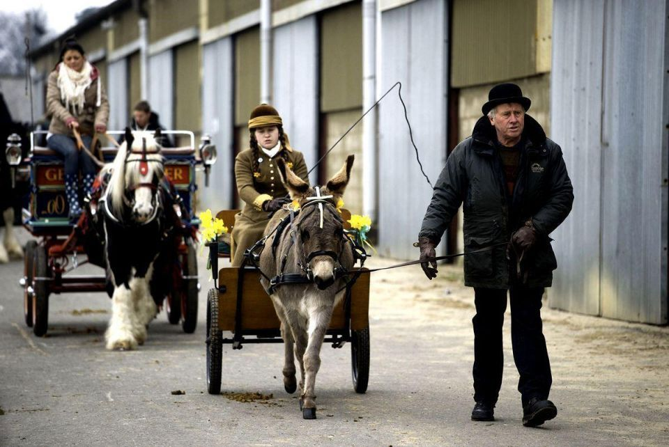 Riders display their horses and carriages during London Harness Horse Parade