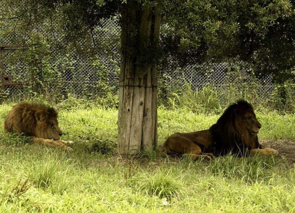 UAE to get new African safari tourist attraction