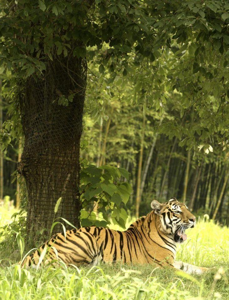 Zoo animals keep cool in heat wave