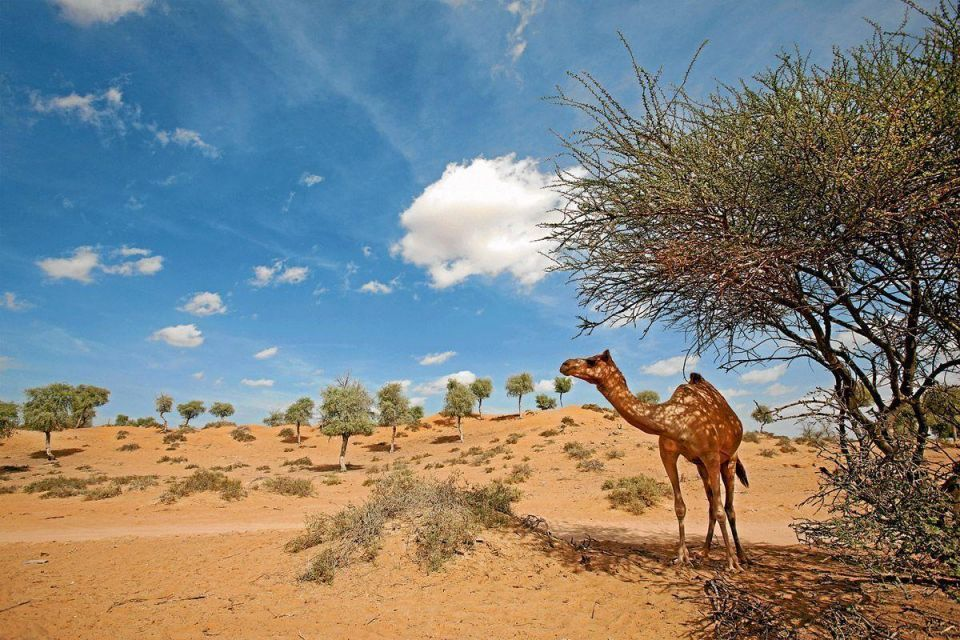 Top five things for visitors to do in Ras Al Khaimah