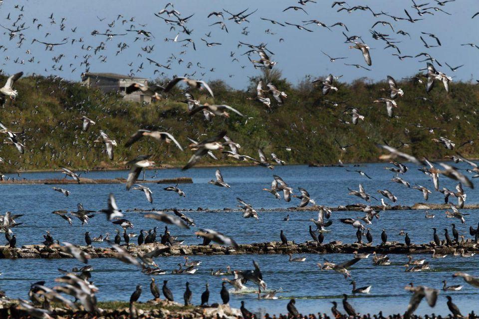 Spectacular bird flight at Snettisham