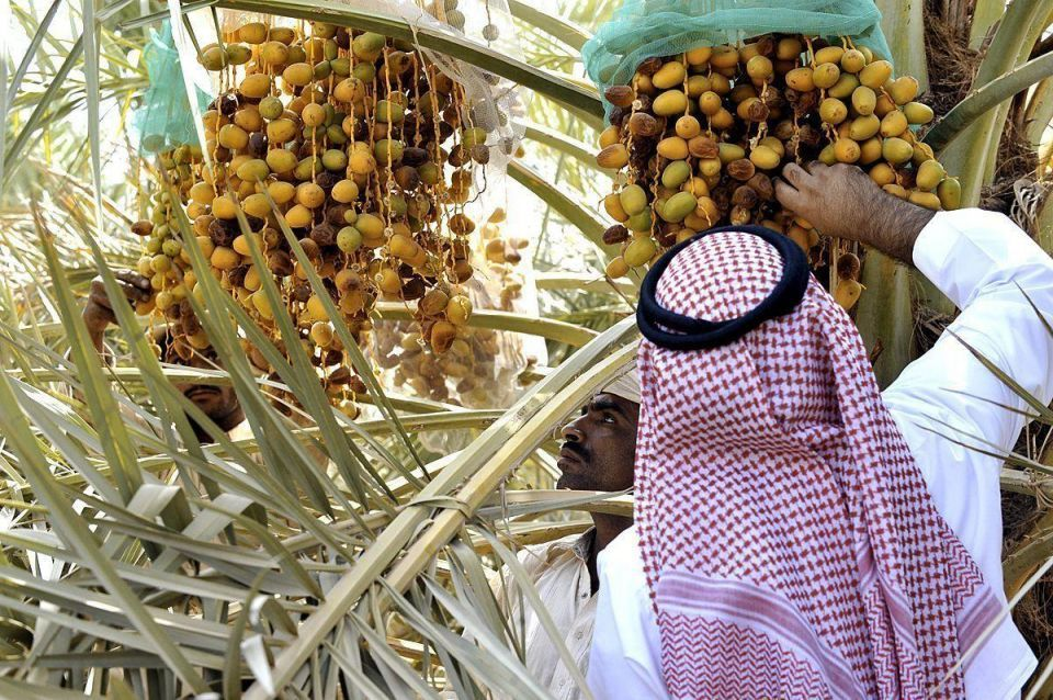 Abu Dhabi launches $27m fund to boost farming sector
