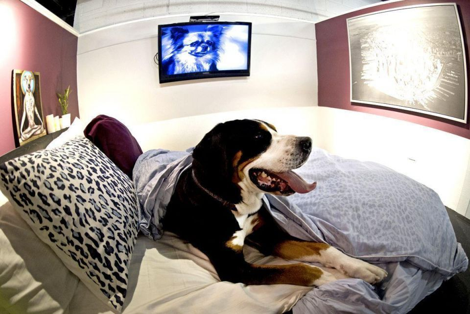 Dubai's first pet hotel to open in March
