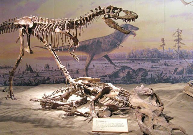 First Dinosaur Remains Unearthed In Saudi Arabia Arabianbusiness