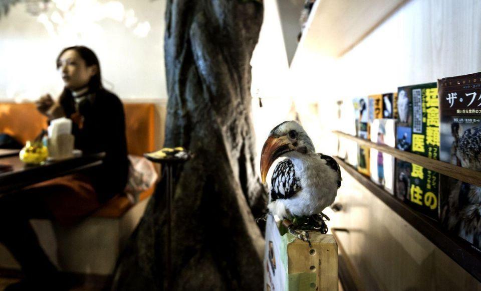 Bird café takes off in Japan