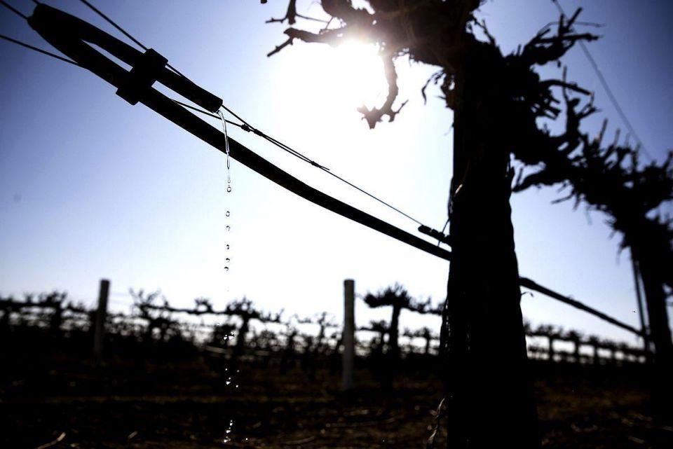 Dubai firm Zeraa said to invest in Bosnian winery