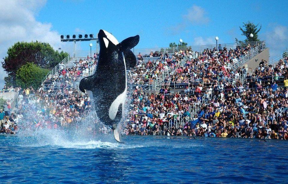 Animal rights group attacks plans for SeaWorld Abu Dhabi