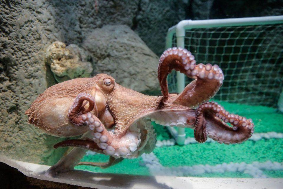 Dubai Mall unveils giant octopus attraction