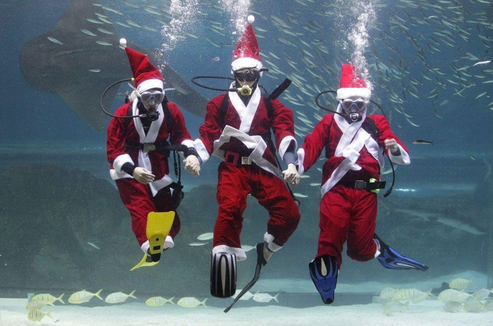 Santa Claus dives in to feed the fish in Seoul