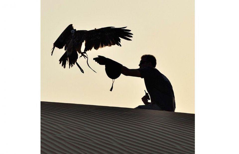 @freedomconservation in Dubai