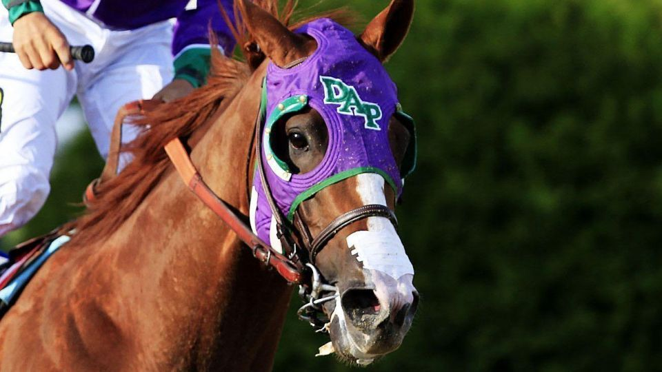 California Chrome ready to justify favourite tag for Dubai World Cup