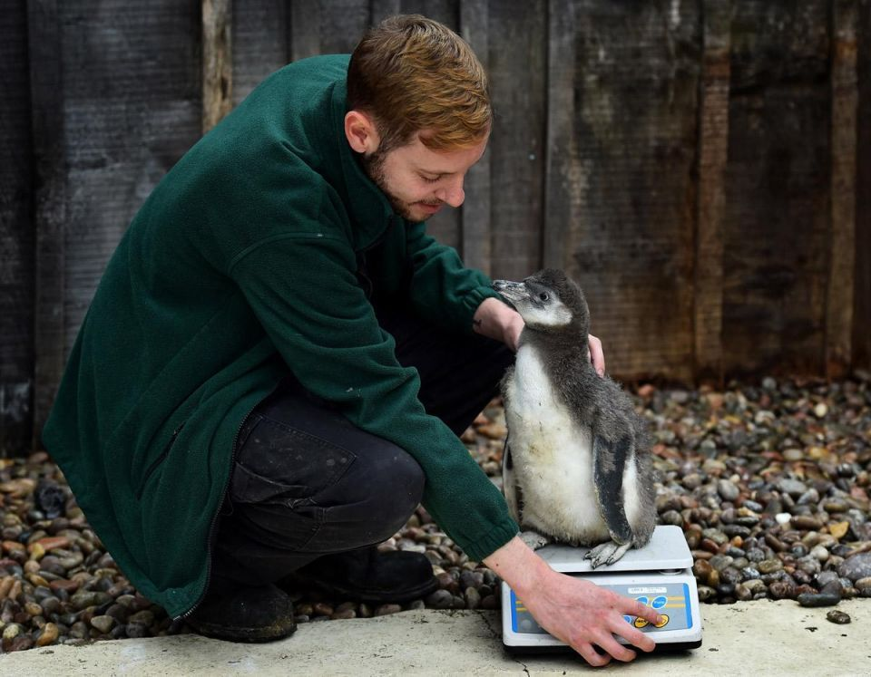 London Zoo annual weigh-in
