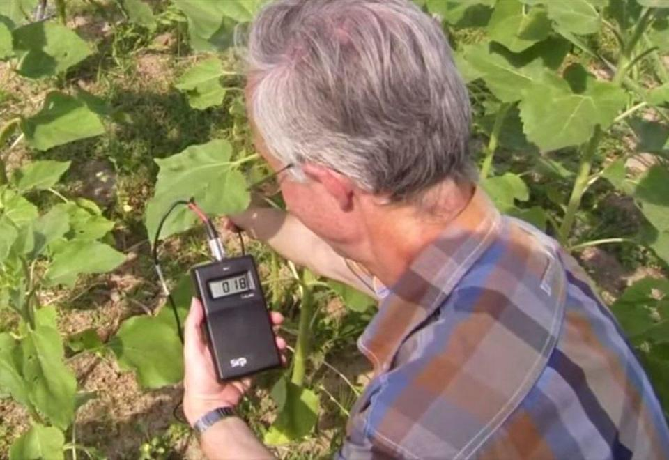 Smart phone ingredient found in plant extracts