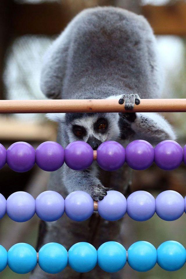 In pics: 2016 stocktake at ZSL London Zoo