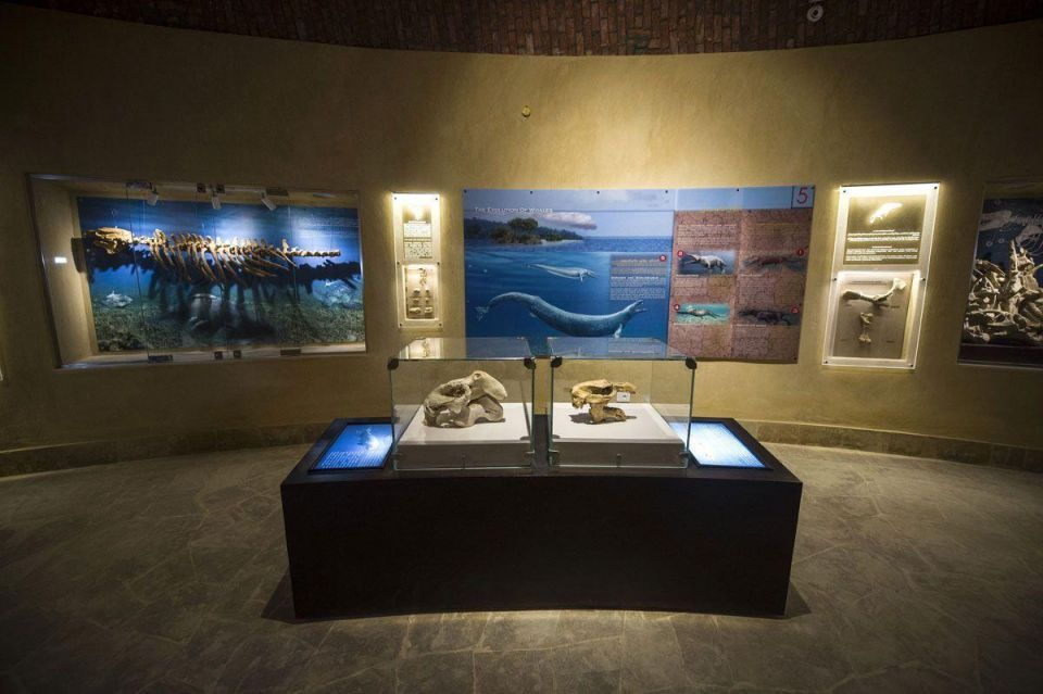 Middle East's first museum dedicated to fossils opens in Egypt