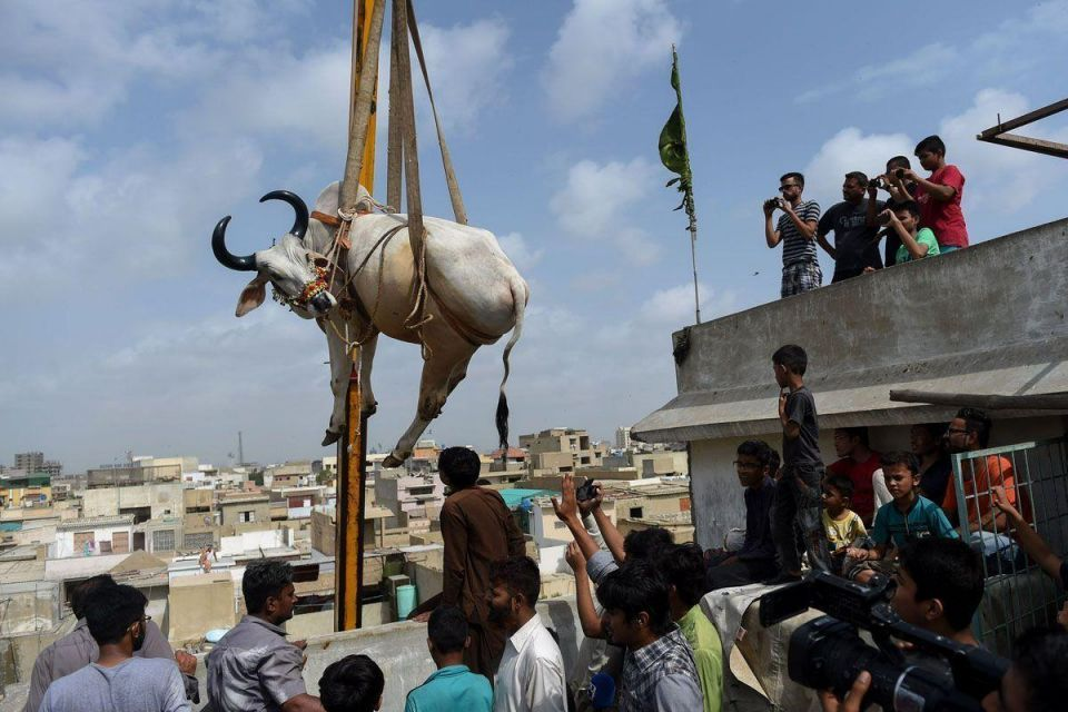 In pictures: Livestock preparations for Eid