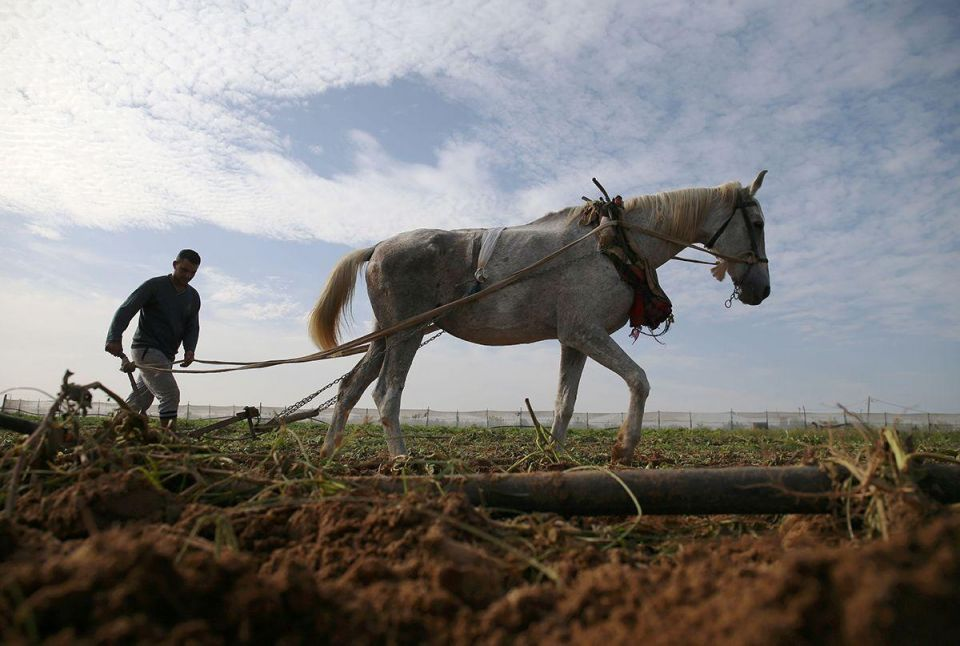 In pictures: Farming in Palestine