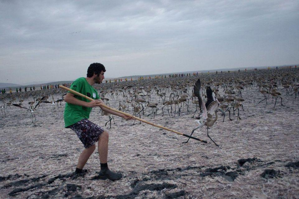 In pics: Flamingos in Spain