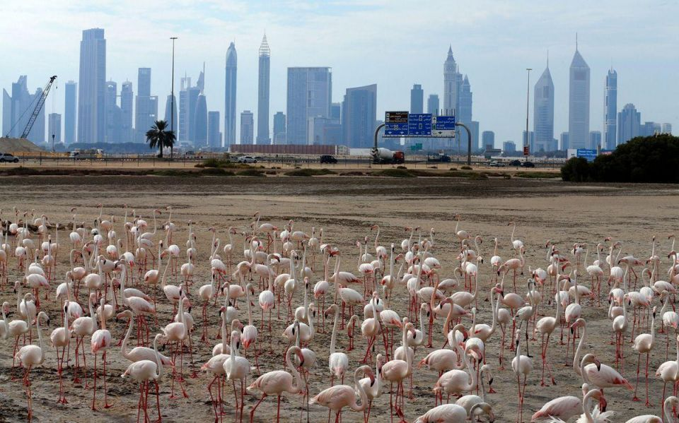 Dubai says 14.9m tourists visit during 2016, up 5%