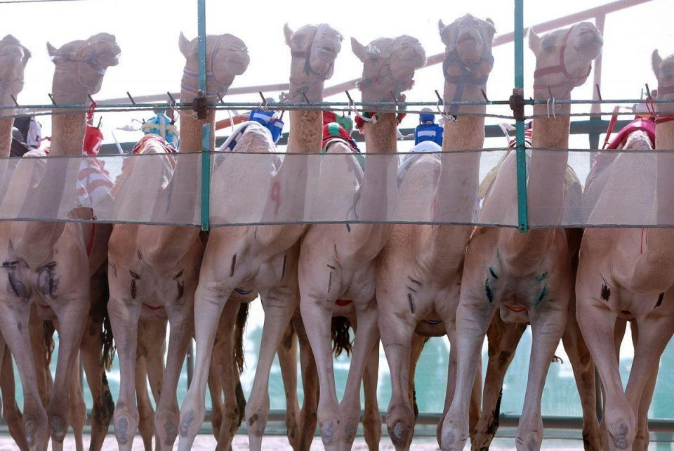In pictures: Camel racing in Kuwait