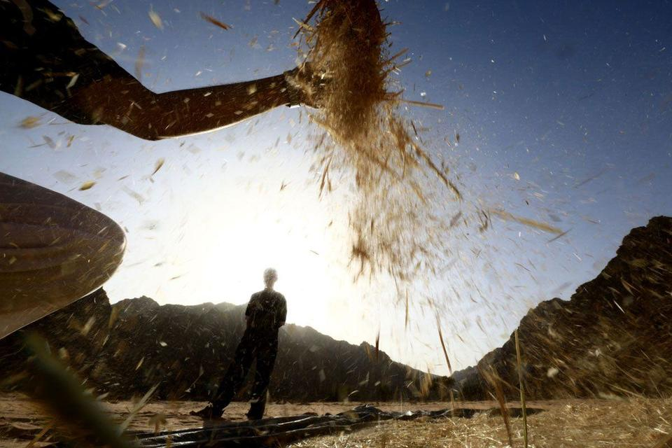 Dubai sets up trading platform to connect with Indian farmers
