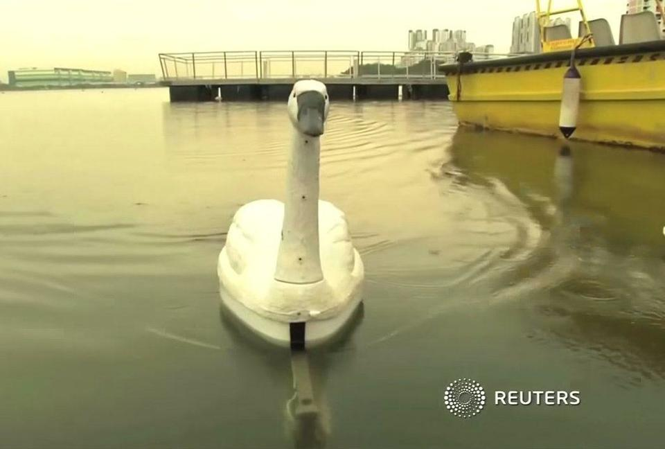 Clean water thanks to robot swans