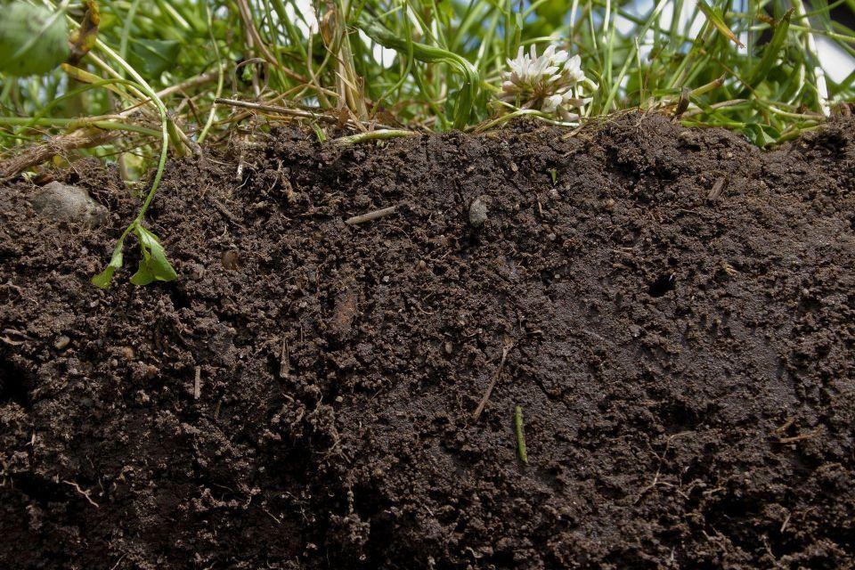 Emirates Soil Museum set to open in Dubai in December