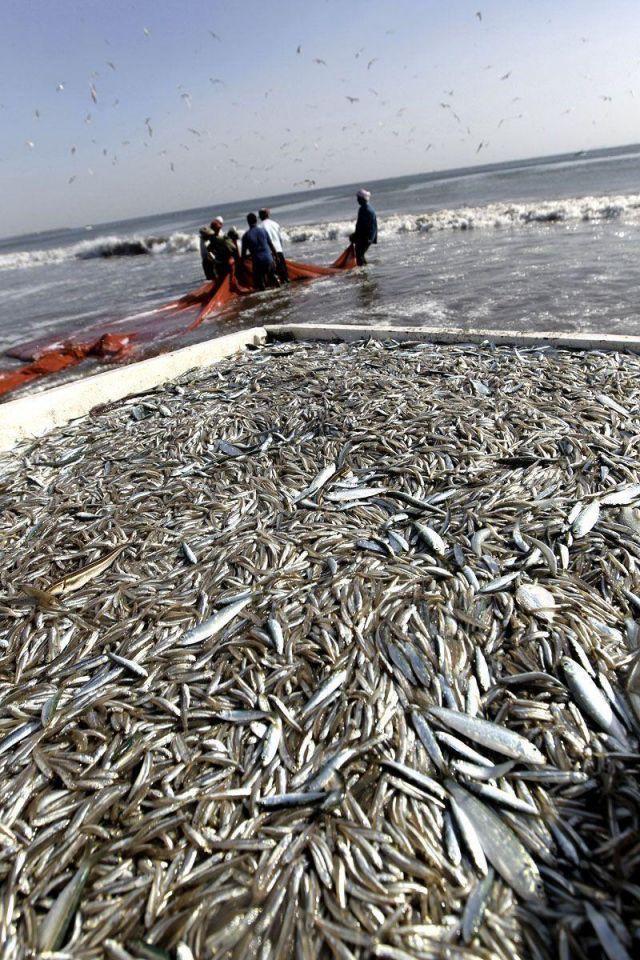 Dubai Municipality to build new fish market
