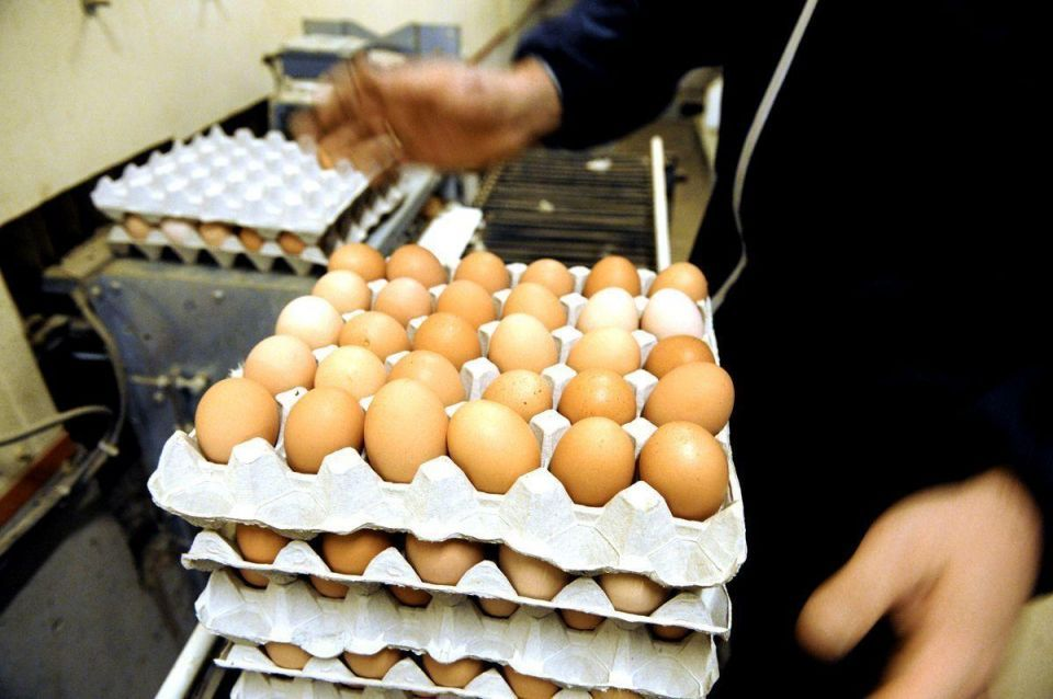Saudi Arabia imposes ban on some French poultry, egg imports