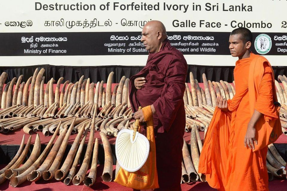 In pictures: Sri Lanka destroys seized ivory