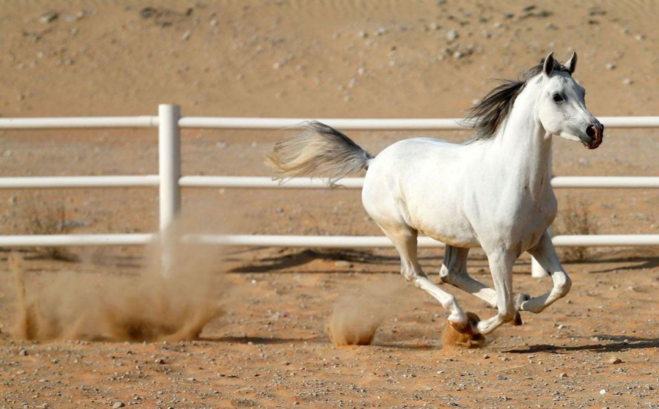 In pictures: Arabian horses at Al-Dhafra Equestrian Club