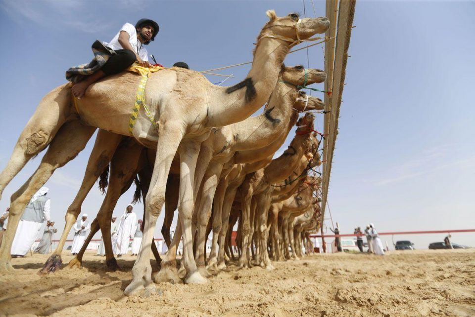 Sheikh Zayed camel racetrack is the first of its kind in Africa