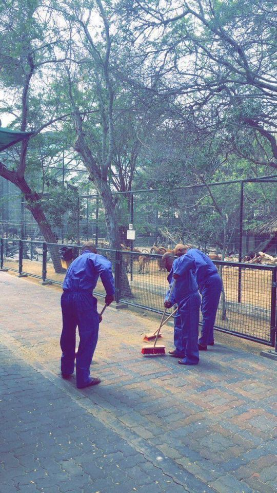 Men who fed cat to dogs ordered to clean Dubai Zoo