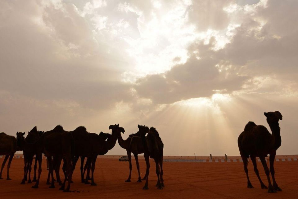 In pictures: King Abdulaziz Camel Festival in Riyadh