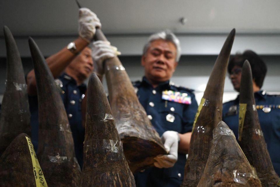 Malaysia seizes big shipment of rhino horns from Qatar flight