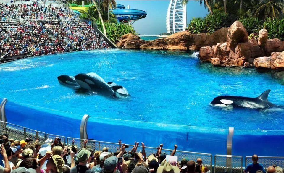 Killer whales not planned for Dubai's Masra Al Arab $1.7bn project