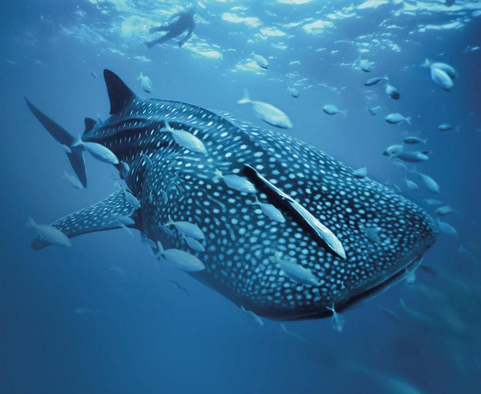 New Abu Dhabi event to put spotlight on protection of oceans