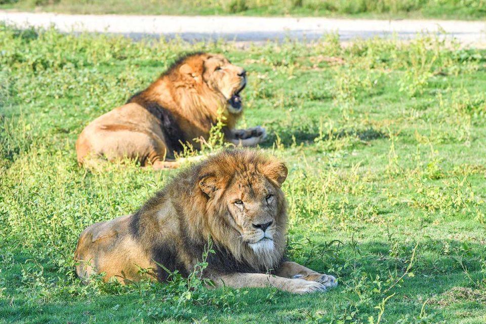 Revealed: Dubai Safari sees 175 new borns since opening
