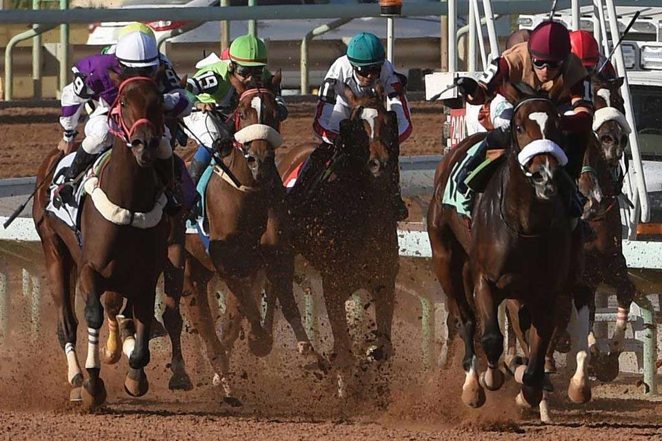 New Saudi horse racing championship to rival Dubai, Kentucky