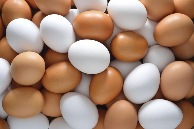 UAE ministry issues warning about contaminated US egg imports