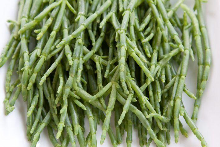 First halophytic vegetables being grown in the UAE
