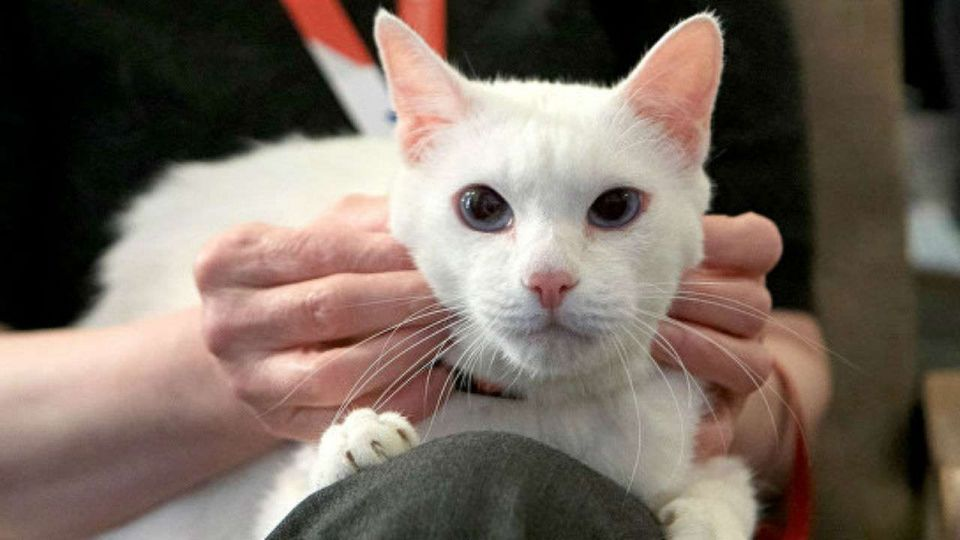 Clairvoyant cat predicts Saudi loss in World Cup opener