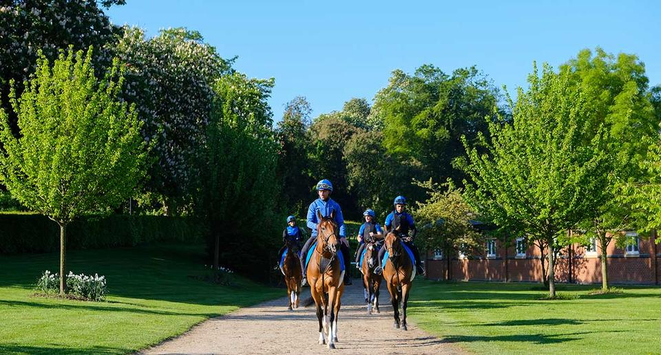 How Dubai's Godolphin became a world leader in horse racing