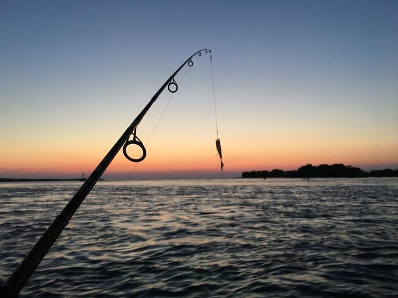 Illegal fishing detected in Ras Al Khaimah creek