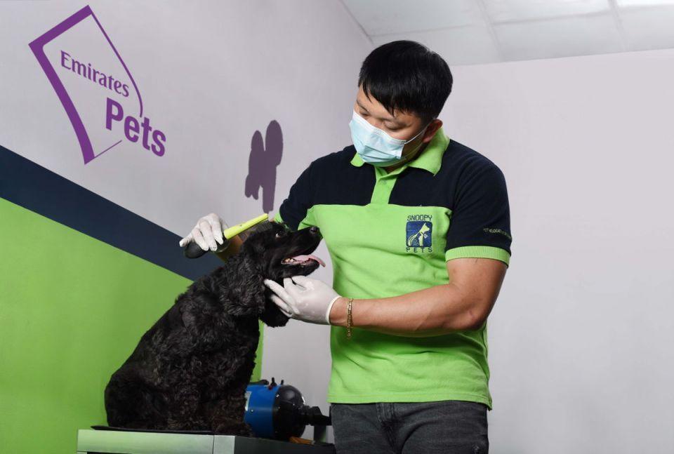 Emirates SkyCargo launches new pets transport service