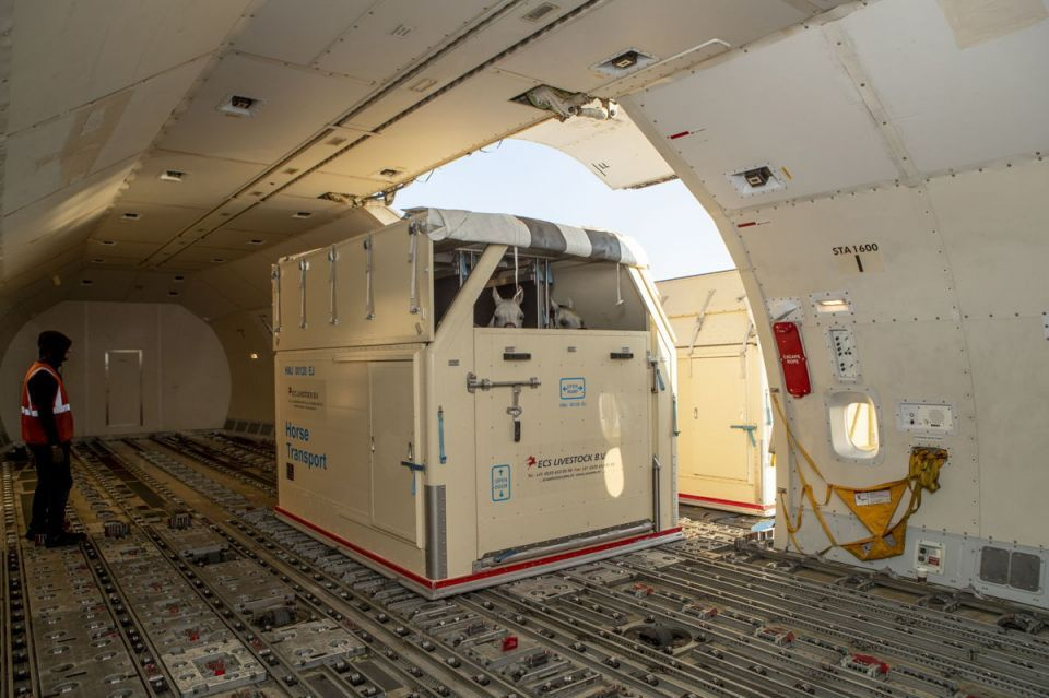 Emirates SkyCargo transports horses to US for top equestrian games