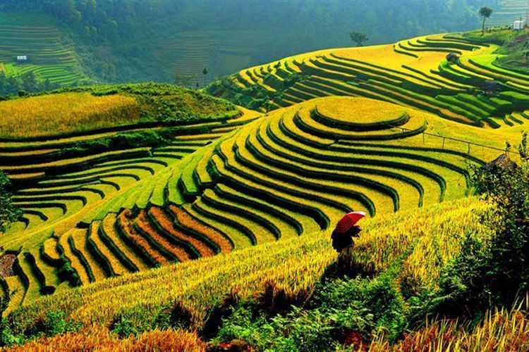 UAE, Vietnamese firms sign deal to promote rice farmers