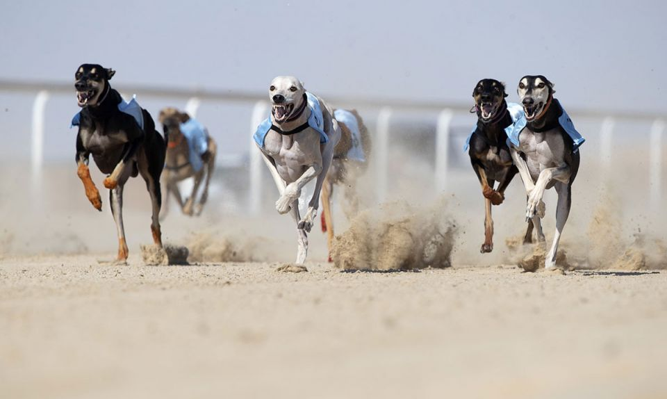 In pictures: Dhafra Camel Festival in the desert west of Abu Dhabi