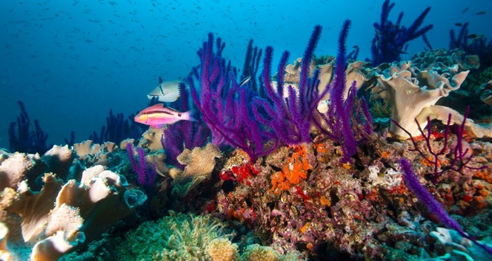 Third of Arabian Gulf marine life could be lost by 2090